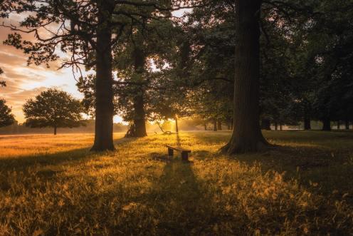 Fotografía de un bosque.