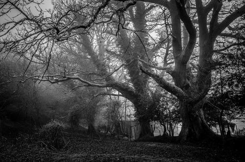 Un bosque ominoso en blanco y negro. Tras los árboles se adivina una cabaña y algunas rejas.
